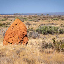 Termite mound near Exmouth
